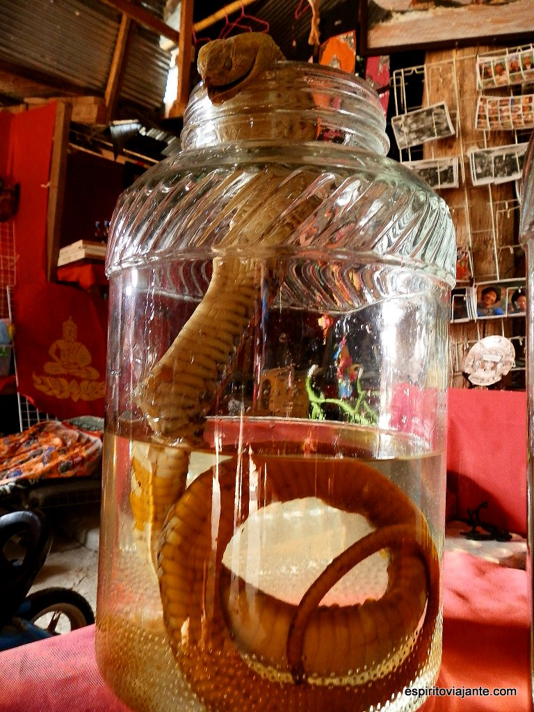 Licor de King Cobra - Ilha de Donsao - Laos