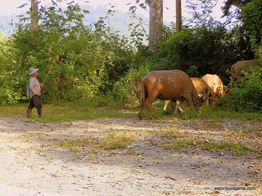 Ilha de Donsao - Laos