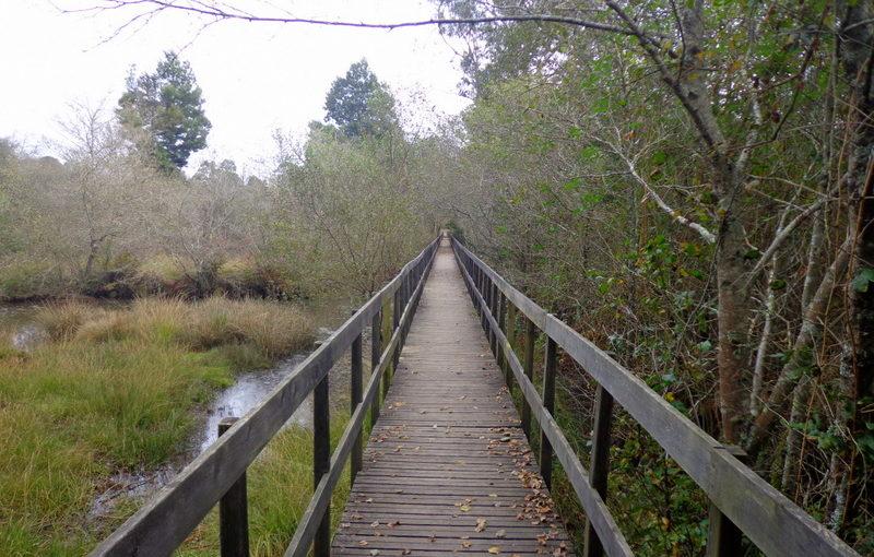 Passadiços nas Lagoas de Bertiandos – Ponte de Lima