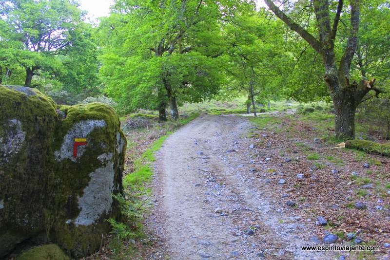 Carvalhal Terras de Bouro Floresta