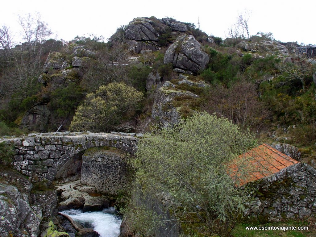 Ponte vernacular