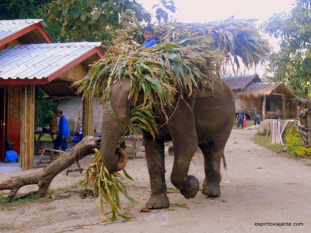 Passeio com elefantes