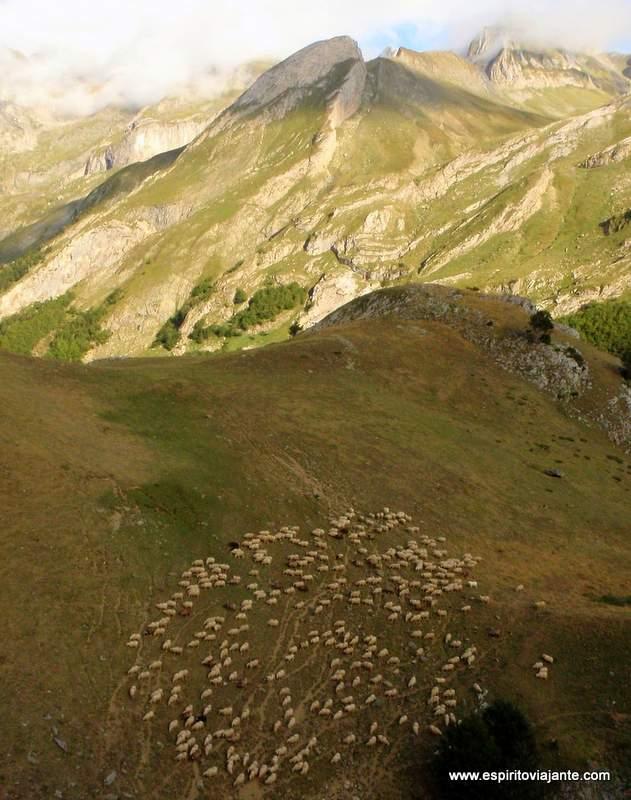 Visitar os Pirinéus Pastores Gado Trekking