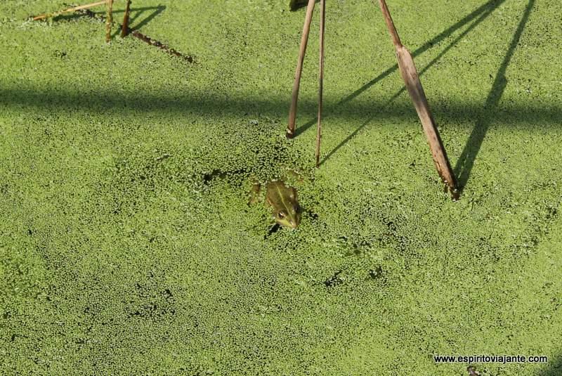 Fauna Lagoa de Paramos Esmoriz