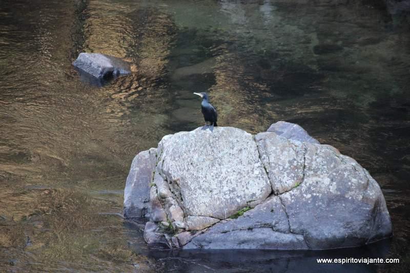 Aves Passadiços do Paiva