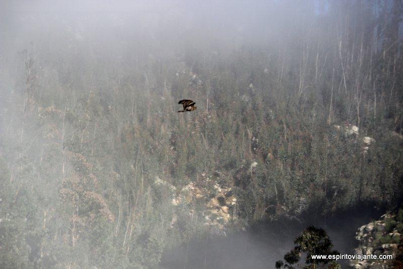 Fauna Aves Rio Paiva